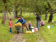 Apfelernte im Philippsgarten